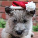 Puppy Santa Hat
